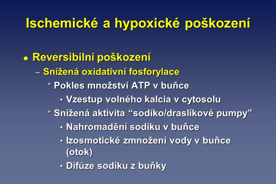 Ischemické a hypoxické poškození l Reversibilní poškození – Snížená oxidativní fosforylace * Pokles množství ATP v buňce Vzestup volného kalcia v cyto