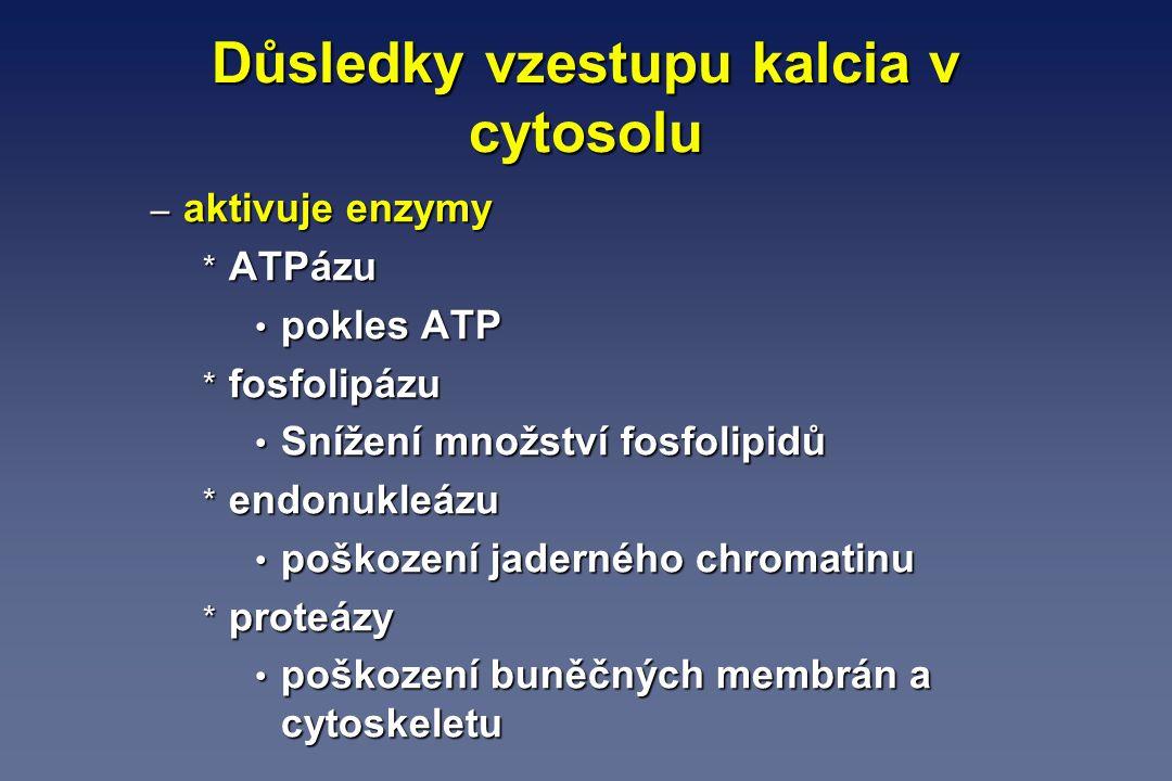 Důsledky vzestupu kalcia v cytosolu – aktivuje enzymy * ATPázu pokles ATP pokles ATP * fosfolipázu Snížení množství fosfolipidů Snížení množství fosfo
