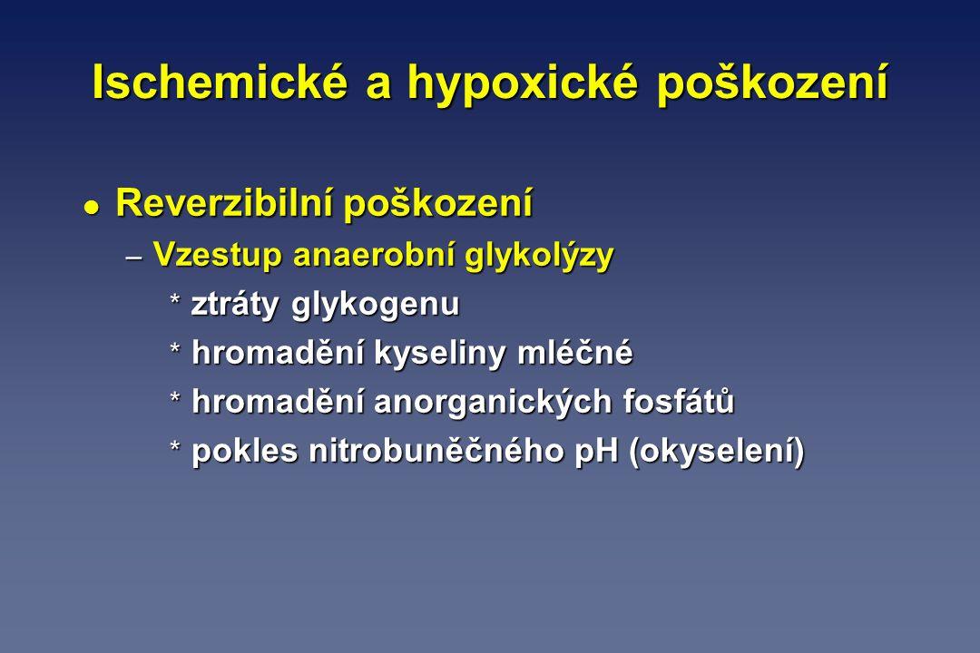 Ischemické a hypoxické poškození l Reverzibilní poškození – Vzestup anaerobní glykolýzy * ztráty glykogenu * hromadění kyseliny mléčné * hromadění ano