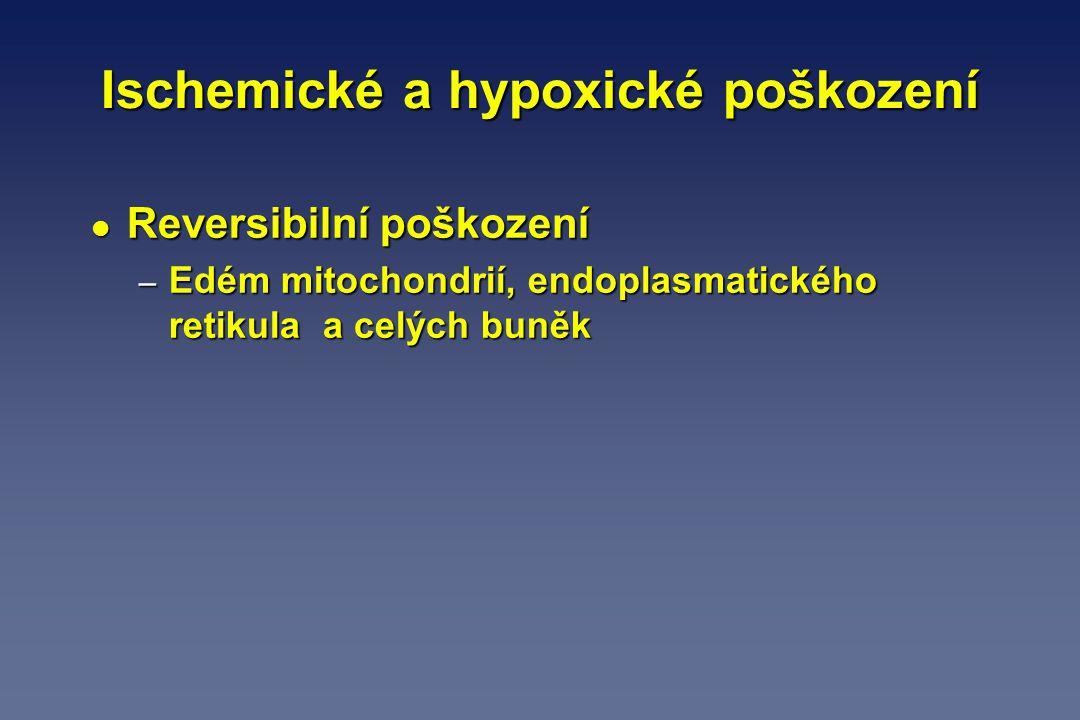 Ischemické a hypoxické poškození l Reversibilní poškození – Edém mitochondrií, endoplasmatického retikula a celých buněk
