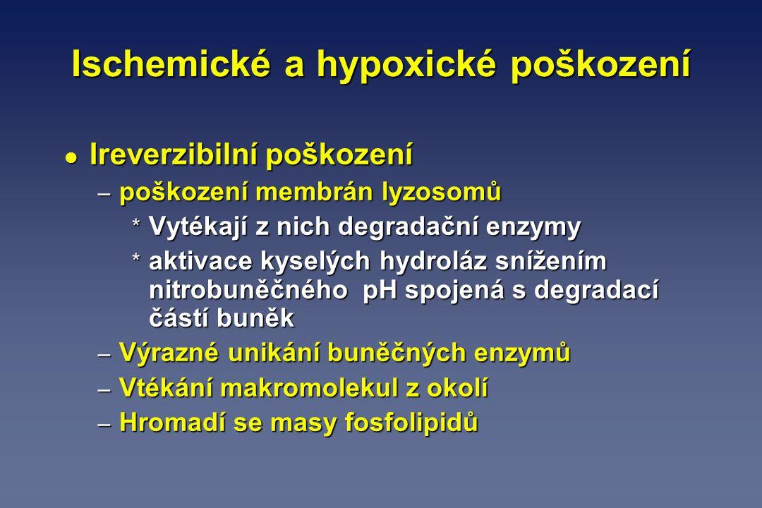 Ischemické a hypoxické poškození l Ireverzibilní poškození – poškození membrán lyzosomů * Vytékají z nich degradační enzymy * aktivace kyselých hydrol