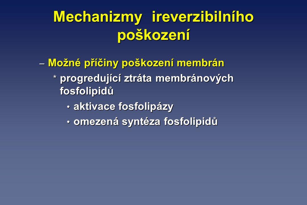 Mechanizmy ireverzibilního poškození – Možné příčiny poškození membrán * progredující ztráta membránových fosfolipidů aktivace fosfolipázy aktivace fo