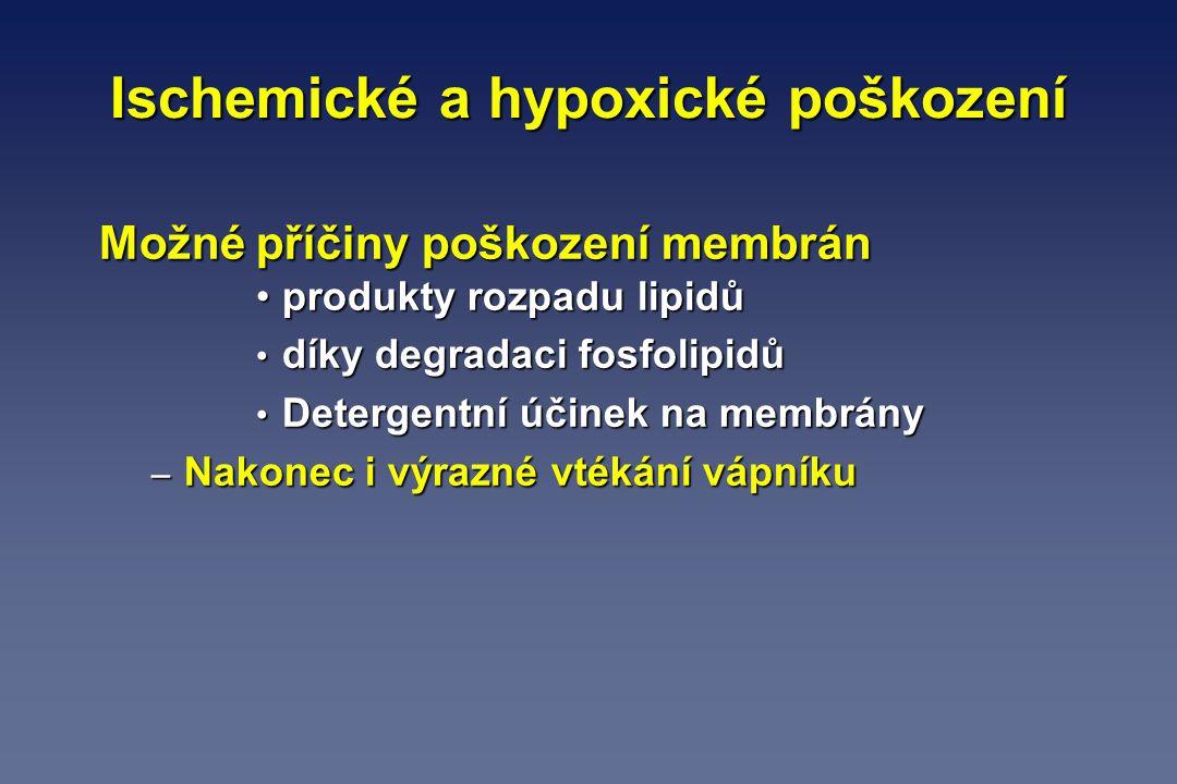 Ischemické a hypoxické poškození Možné příčiny poškození membrán produkty rozpadu lipidůprodukty rozpadu lipidů díky degradaci fosfolipidů díky degrad