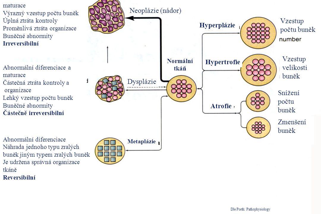 Abnormální diferenciace a maturace Výrazný vzestup počtu buněk Úplná ztráta kontroly Proměnlivá ztráta organizace Buněčné abnormity Irreversibilní Abn