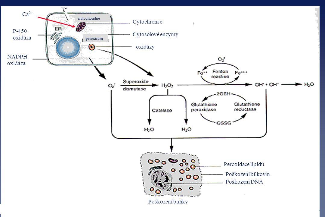 mitochondrie peroxisom P-450 oxidáza NADPH oxidáza Cytochrom c Cytosolové enzymy oxidázy Ca 2+ Peroxidace lipidů Poškození bílkovin Poškození DNA Pošk