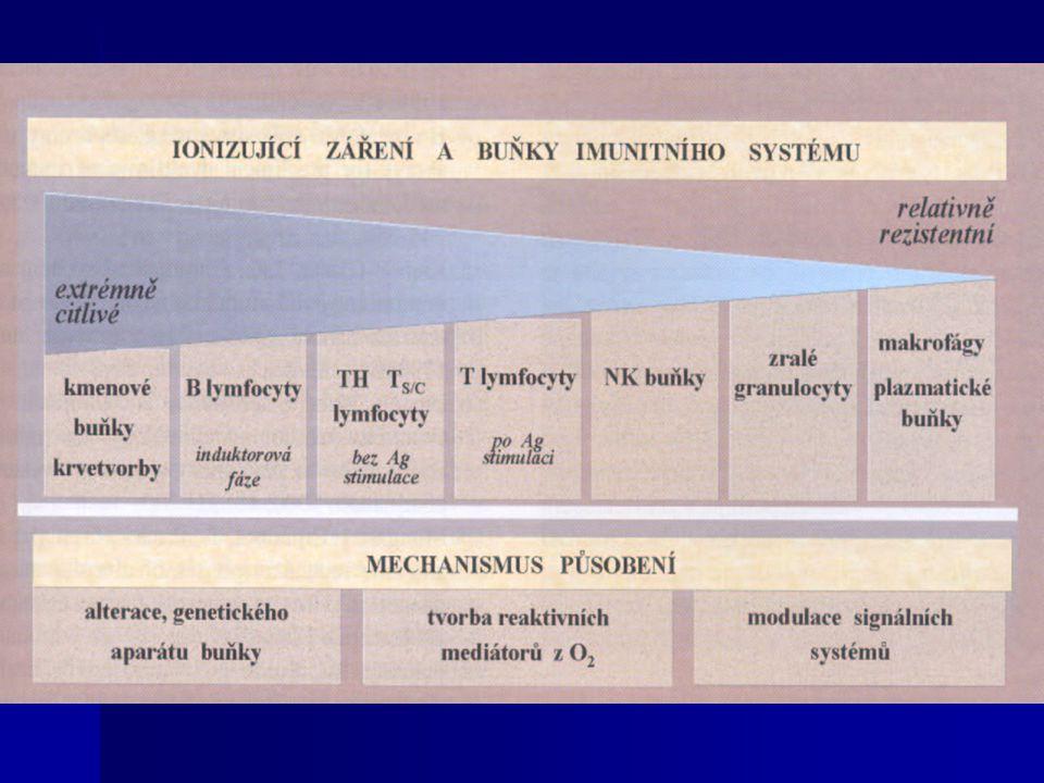 Účinky ionizujícího záření na člověka  nestochastické: - akutní nemoc z ozáření - akutní nemoc z ozáření - akutní lokalizované poškození - akutní lokalizované poškození - poškození plodu in utero - poškození plodu in utero - pozdní nenádorová poškození - pozdní nenádorová poškození  stochastické - zhoubné nádory - zhoubné nádory - genetické změny - genetické změny