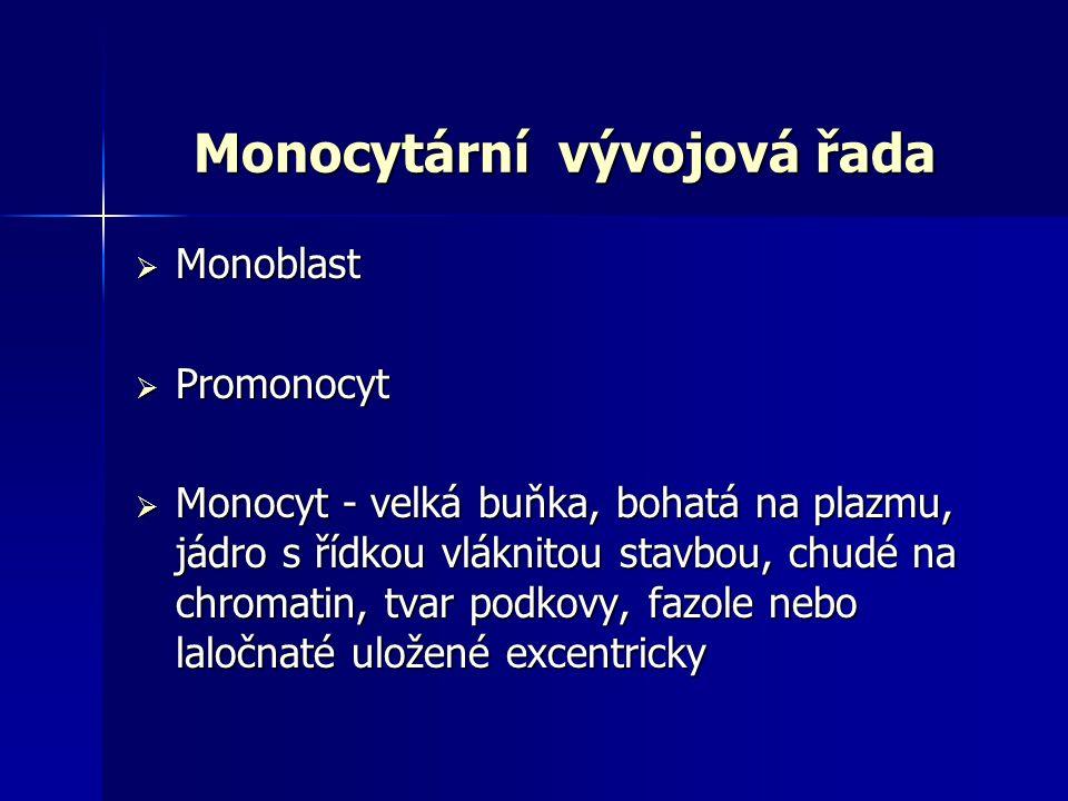 Monocytární vývojová řada  Monoblast  Promonocyt  Monocyt - velká buňka, bohatá na plazmu, jádro s řídkou vláknitou stavbou, chudé na chromatin, tv