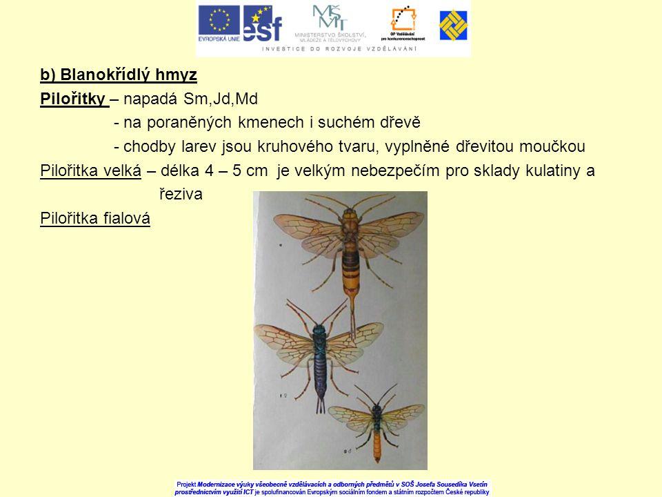 b) Blanokřídlý hmyz Pilořitky – napadá Sm,Jd,Md - na poraněných kmenech i suchém dřevě - chodby larev jsou kruhového tvaru, vyplněné dřevitou moučkou