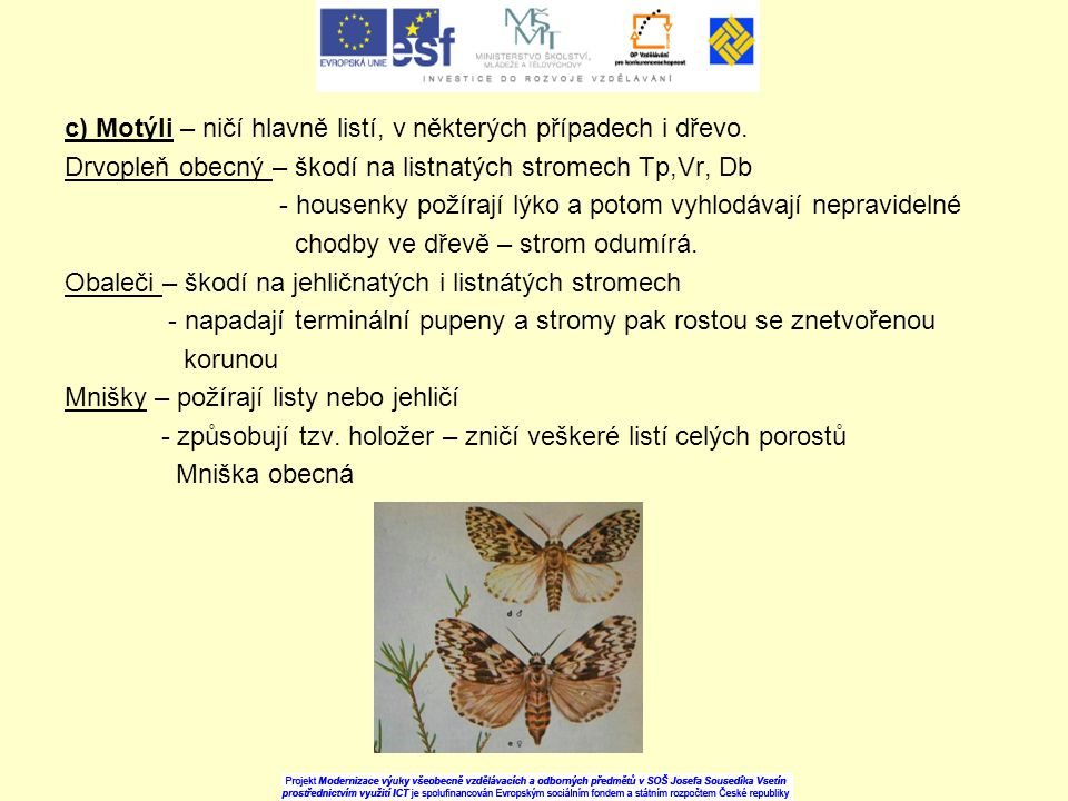 c) Motýli – ničí hlavně listí, v některých případech i dřevo. Drvopleň obecný – škodí na listnatých stromech Tp,Vr, Db - housenky požírají lýko a poto