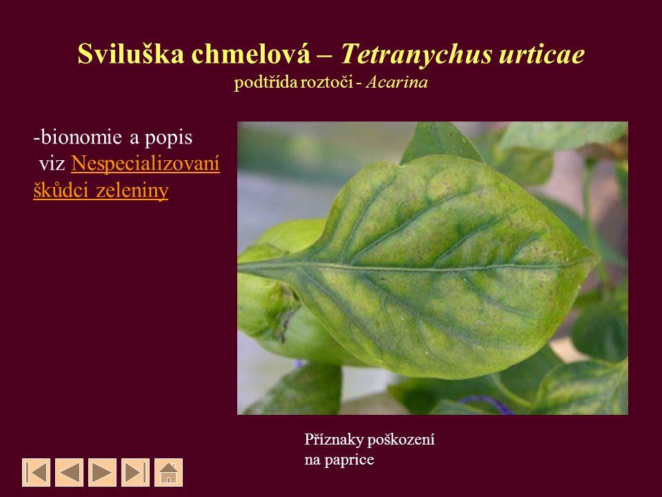 Mandelinka bramborová – Leptinotarsa decemlineata řád Brouci - Coleoptera, čeleď Mandelinkovití - Chrysomelidae - brouci dlouzí cca 16 mm - vajíčka oranžově žlutá, ve skupinkách na rubu listů - larvy oranžově červené, velké 15 - 16 mm kuklí se v půdě, - kuklí se v půdě, brouci zde přezimují - létají od 1/2 května do 1/2 června - brouci nové generace létají od 1/2 července - má 1, částečně druhou generaci ročně - škodí larvy a brouci okusují listy - živné rostliny: brambor, rajče, lilkovité rostliny OCHRANA