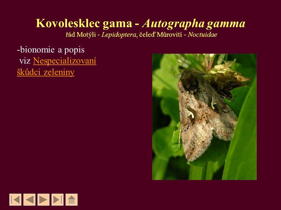 Kovolesklec gama - Autographa gamma řád Motýli - Lepidoptera, čeleď Můrovití - Noctuidae -bionomie a popis viz NespecializovaníNespecializovaní škůdci