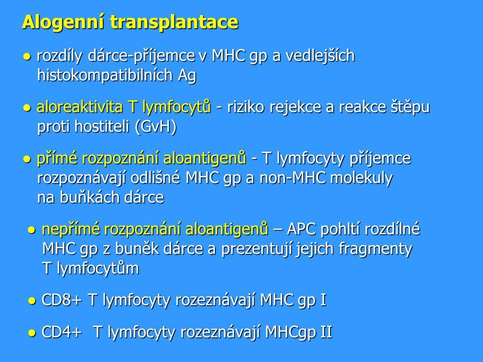 Alogenní transplantace ● rozdíly dárce-příjemce v MHC gp a vedlejších histokompatibilních Ag ● aloreaktivita T lymfocytů - riziko rejekce a reakce štěpu proti hostiteli (GvH) ● přímé rozpoznání aloantigenů - T lymfocyty příjemce rozpoznávají odlišné MHC gp a non-MHC molekuly na buňkách dárce ● nepřímé rozpoznání aloantigenů – APC pohltí rozdílné MHC gp z buněk dárce a prezentují jejich fragmenty T lymfocytům ● CD8+ T lymfocyty rozeznávají MHC gp I ● CD4+ T lymfocyty rozeznávají MHCgp II Alogenní transplantace ● rozdíly dárce-příjemce v MHC gp a vedlejších histokompatibilních Ag ● aloreaktivita T lymfocytů - riziko rejekce a reakce štěpu proti hostiteli (GvH) ● přímé rozpoznání aloantigenů - T lymfocyty příjemce rozpoznávají odlišné MHC gp a non-MHC molekuly na buňkách dárce ● nepřímé rozpoznání aloantigenů – APC pohltí rozdílné MHC gp z buněk dárce a prezentují jejich fragmenty T lymfocytům ● CD8+ T lymfocyty rozeznávají MHC gp I ● CD4+ T lymfocyty rozeznávají MHCgp II