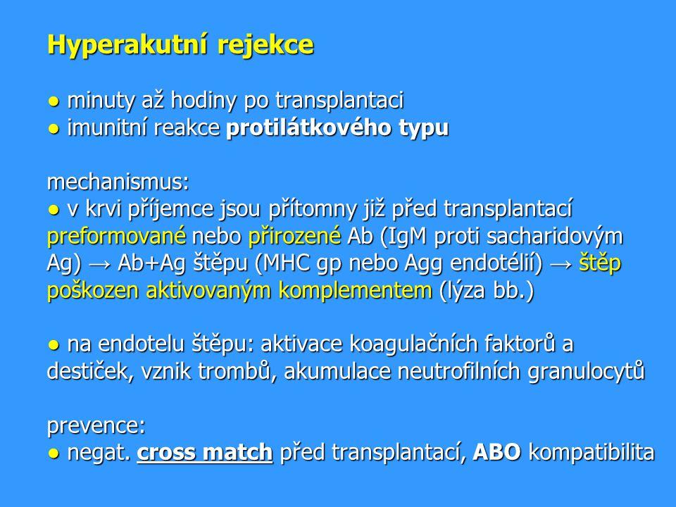 Hyperakutní rejekce ● minuty až hodiny po transplantaci ● imunitní reakce protilátkového typu mechanismus: ● v krvi příjemce jsou přítomny již před transplantací preformované nebo přirozené Ab (IgM proti sacharidovým Ag) → Ab+Ag štěpu (MHC gp nebo Agg endotélií) → štěp poškozen aktivovaným komplementem (lýza bb.) ● na endotelu štěpu: aktivace koagulačních faktorů a destiček, vznik trombů, akumulace neutrofilních granulocytů prevence: ● negat.