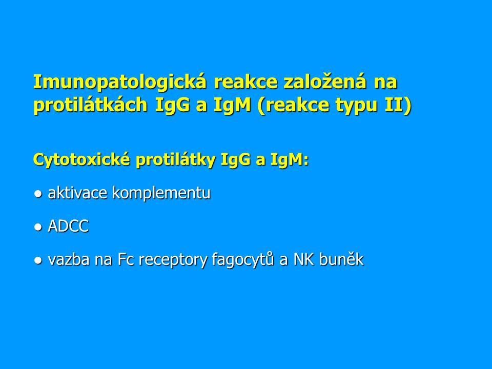 Imunopatologická reakce založená na protilátkách IgG a IgM (reakce typu II) Cytotoxické protilátky IgG a IgM: ● aktivace komplementu ● ADCC ● vazba na