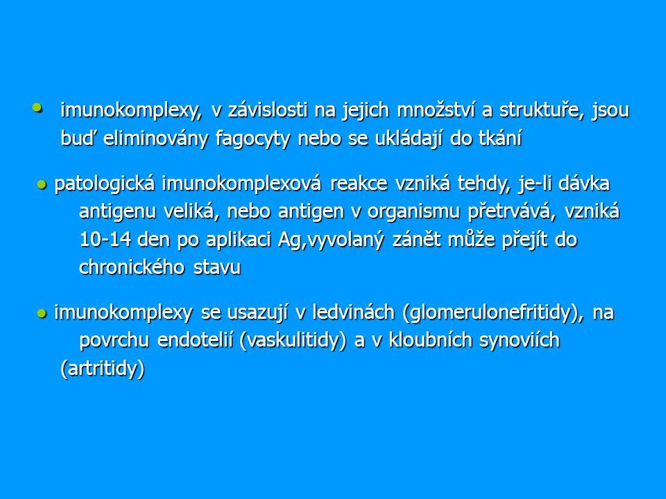 imunokomplexy, v závislosti na jejich množství a struktuře, jsou buď eliminovány fagocyty nebo se ukládají do tkání imunokomplexy, v závislosti na jejich množství a struktuře, jsou buď eliminovány fagocyty nebo se ukládají do tkání ● patologická imunokomplexová reakce vzniká tehdy, je-li dávka antigenu veliká, nebo antigen v organismu přetrvává, vzniká 10-14 den po aplikaci Ag,vyvolaný zánět může přejít do chronického stavu ● imunokomplexy se usazují v ledvinách (glomerulonefritidy), na povrchu endotelií (vaskulitidy) a v kloubních synoviích (artritidy)