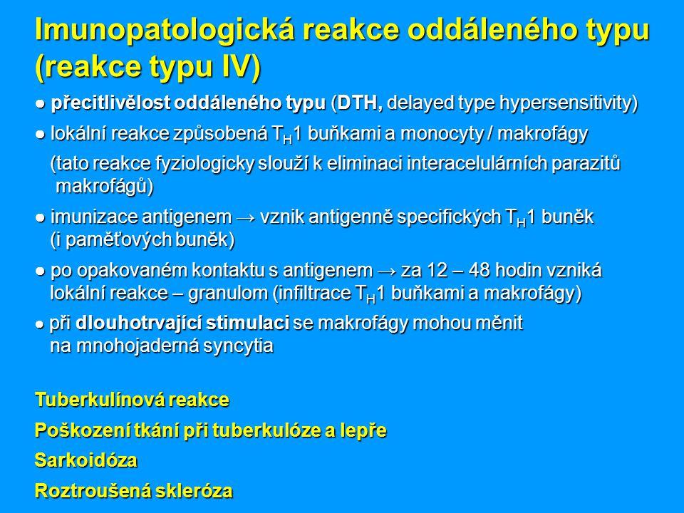 Imunopatologická reakce oddáleného typu (reakce typu IV) ● přecitlivělost oddáleného typu (DTH, delayed type hypersensitivity) ● lokální reakce způsobená T H 1 buňkami a monocyty / makrofágy (tato reakce fyziologicky slouží k eliminaci interacelulárních parazitů makrofágů) (tato reakce fyziologicky slouží k eliminaci interacelulárních parazitů makrofágů) ● imunizace antigenem → vznik antigenně specifických T H 1 buněk (i paměťových buněk) ● po opakovaném kontaktu s antigenem → za 12 – 48 hodin vzniká lokální reakce – granulom (infiltrace T H 1 buňkami a makrofágy) ● při dlouhotrvající stimulaci se makrofágy mohou měnit na mnohojaderná syncytia Tuberkulínová reakce Poškození tkání při tuberkulóze a lepře Sarkoidóza Roztroušená skleróza
