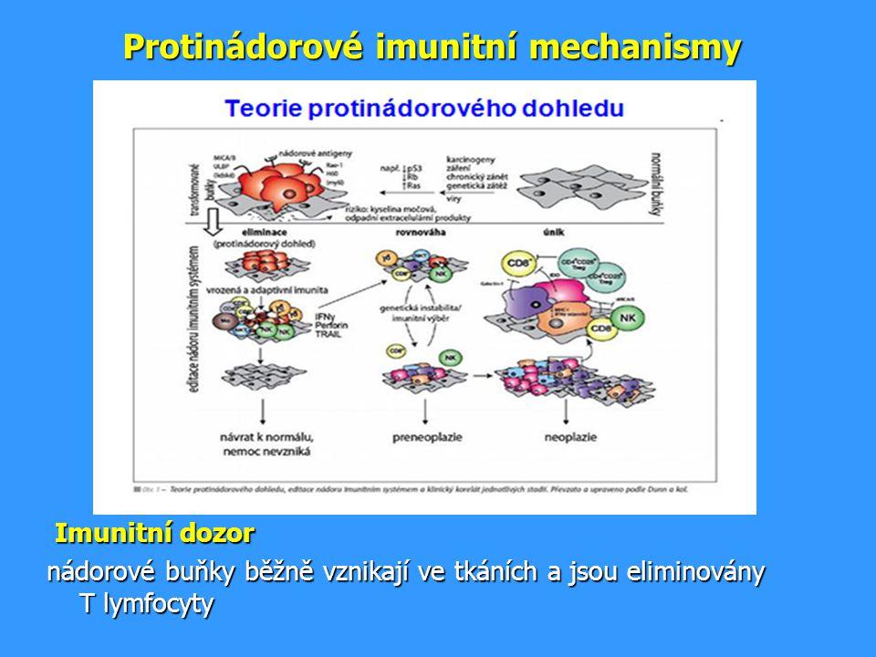Protinádorové imunitní mechanismy Imunitní dozor Imunitní dozor nádorové buňky běžně vznikají ve tkáních a jsou eliminovány T lymfocyty