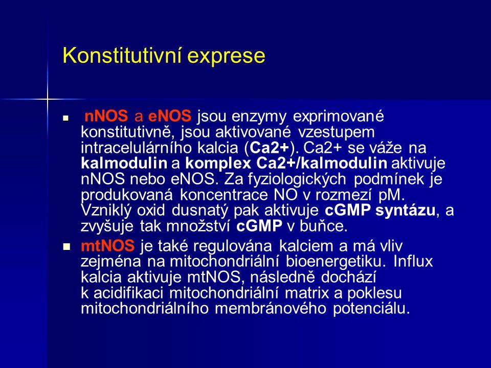 Konstitutivní exprese nNOS a eNOS jsou enzymy exprimované konstitutivně, jsou aktivované vzestupem intracelulárního kalcia (Ca2+). Ca2+ se váže na kal