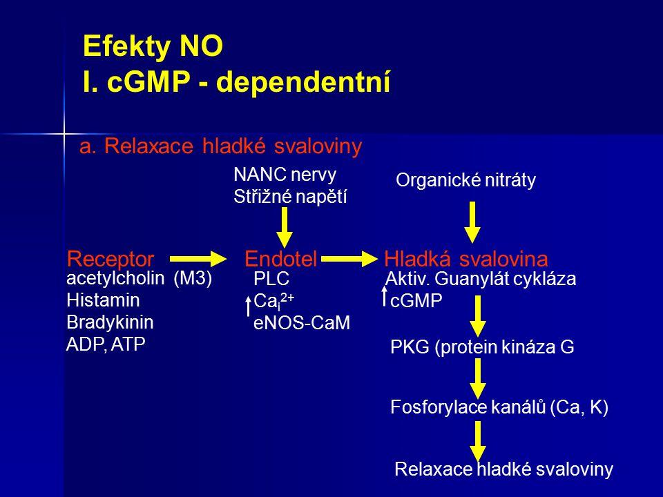 Efekty NO I. cGMP - dependentní a.Relaxace hladké svaloviny Receptor acetylcholin (M3) Histamin Bradykinin ADP, ATP EndotelHladká svalovina NANC nervy