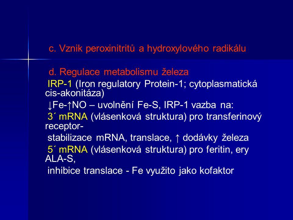 c. Vznik peroxinitritů a hydroxylového radikálu d. Regulace metabolismu železa IRP-1 (Iron regulatory Protein-1; cytoplasmatická cis-akonitáza) ↓Fe-↑N