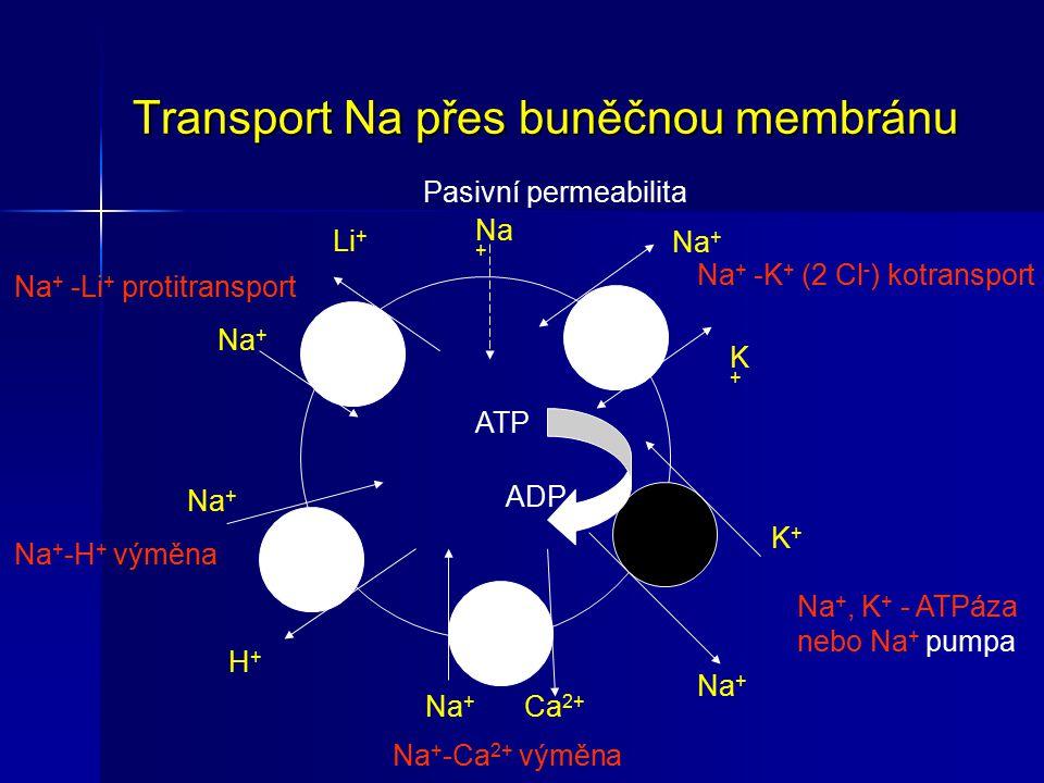 Transport Na přes buněčnou membránu Na + -Li + protitransport Pasivní permeabilita Na + Li + Na + -H + výměna Na + H+H+ Na + -Ca 2+ výměna Na + Ca 2+