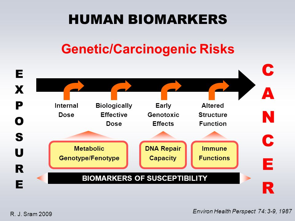 HUMAN BIOMARKERS Genetic/Carcinogenic Risks EXPOSUREEXPOSURE Internal Dose Biologically Effective Dose Early Genotoxic Effects Altered Structure Function CANCERCANCER Environ Health Perspect 74: 3-9, 1987 Metabolic Genotype/Fenotype DNA Repair Capacity BIOMARKERS OF SUSCEPTIBILITY Immune Functions R.