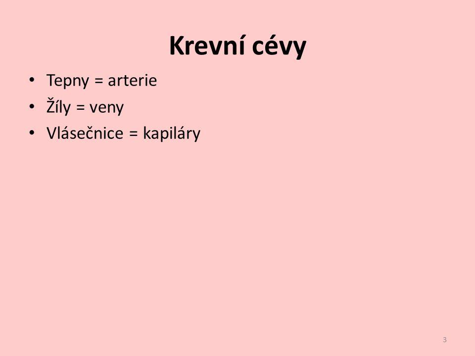 Krevní cévy Tepny = arterie Žíly = veny Vlásečnice = kapiláry 3