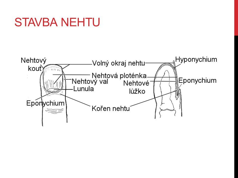 STAVBA NEHTU