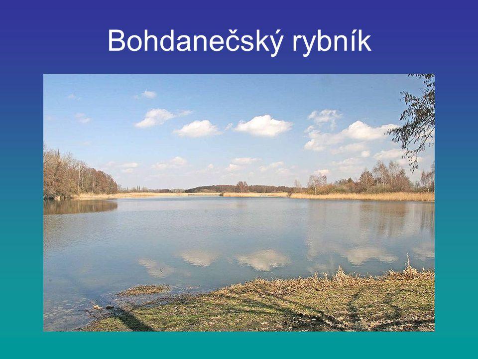Bohdanečský rybník