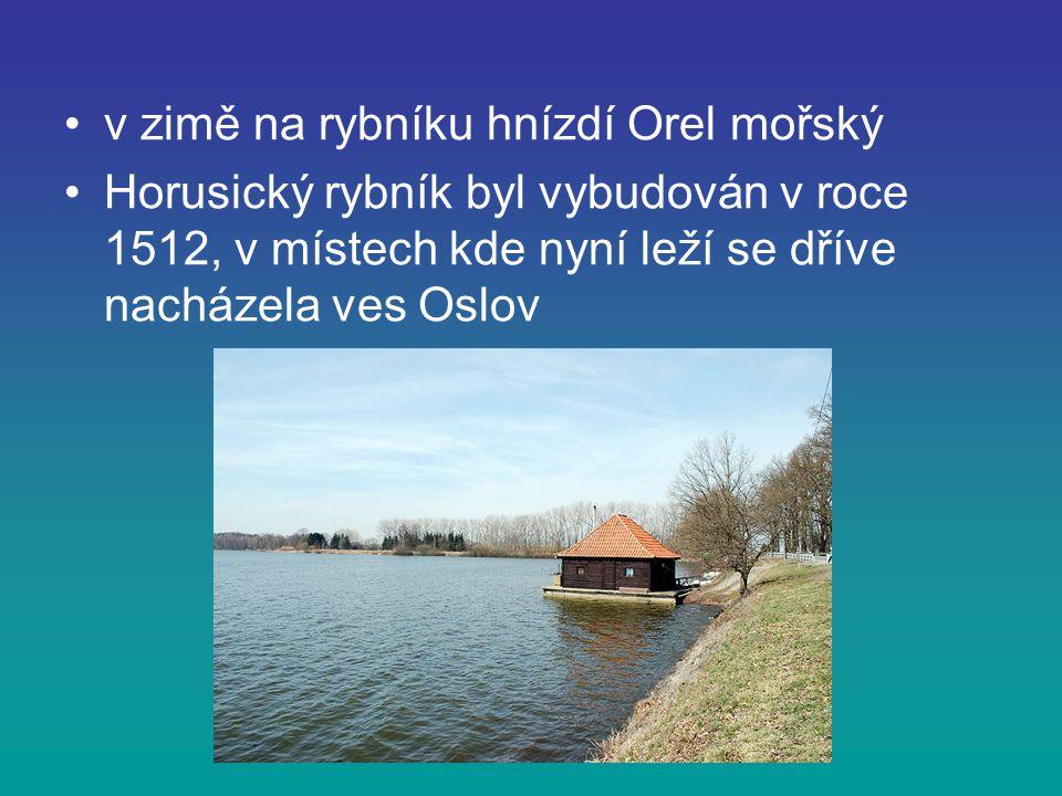 v zimě na rybníku hnízdí Orel mořský Horusický rybník byl vybudován v roce 1512, v místech kde nyní leží se dříve nacházela ves Oslov