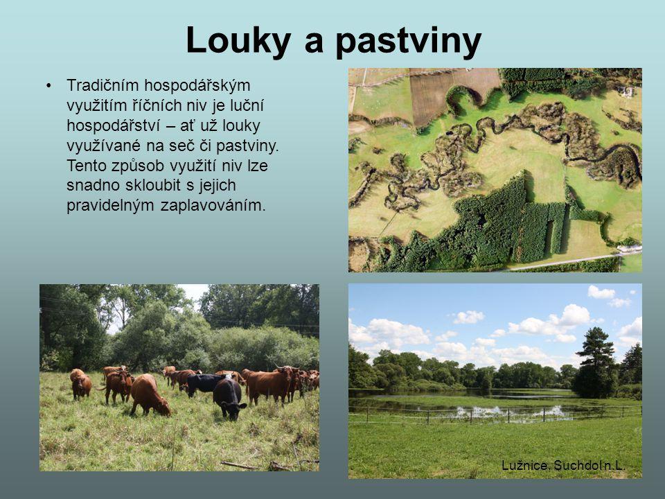 Louky a pastviny Tradičním hospodářským využitím říčních niv je luční hospodářství – ať už louky využívané na seč či pastviny. Tento způsob využití ni