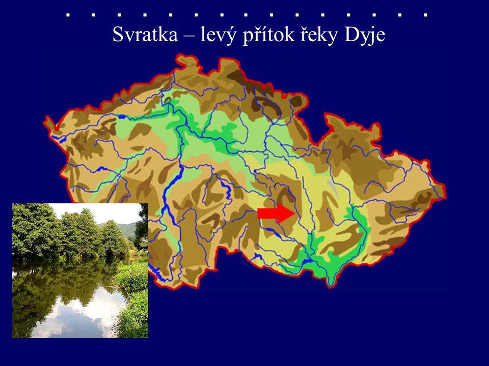Svratka – levý přítok řeky Dyje