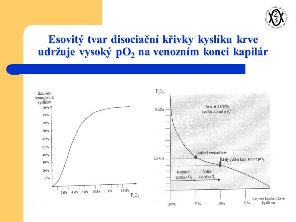 Esovitý tvar disociační křivky kyslíku krve udržuje vysoký pO 2 na venozním konci kapilár