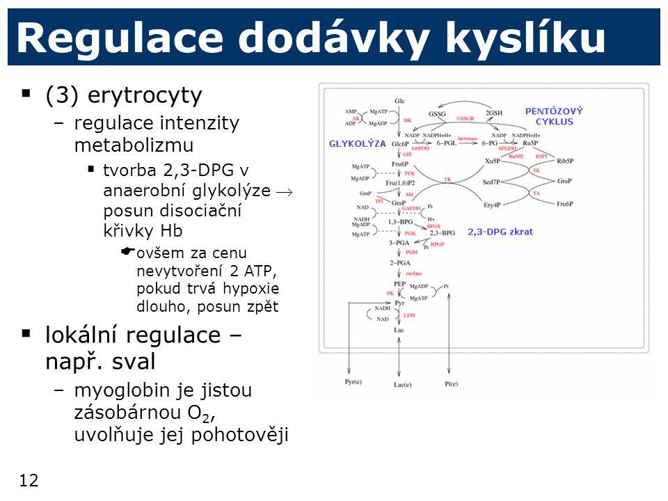 12 Regulace dodávky kyslíku  (3) erytrocyty –regulace intenzity metabolizmu  tvorba 2,3-DPG v anaerobní glykolýze  posun disociační křivky Hb  ovšem za cenu nevytvoření 2 ATP, pokud trvá hypoxie dlouho, posun zpět  lokální regulace – např.