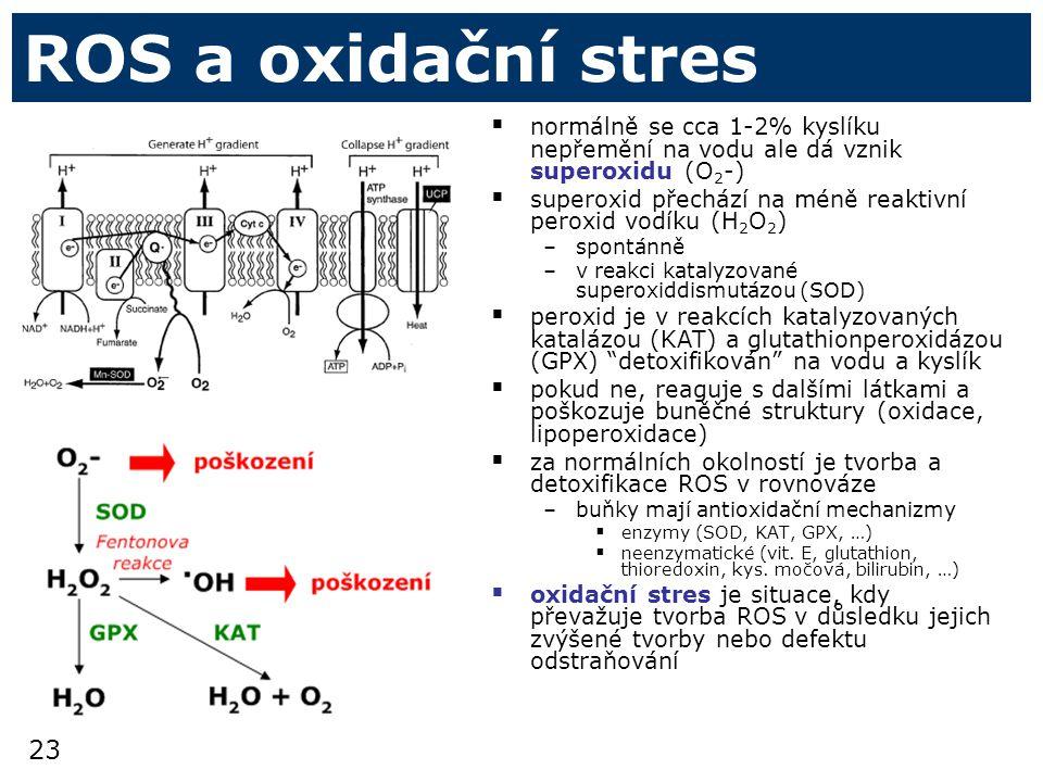 23 ROS a oxidační stres  normálně se cca 1-2% kyslíku nepřemění na vodu ale dá vznik superoxidu (O 2 -)  superoxid přechází na méně reaktivní peroxid vodíku (H 2 O 2 ) –spontánně –v reakci katalyzované superoxiddismutázou (SOD)  peroxid je v reakcích katalyzovaných katalázou (KAT) a glutathionperoxidázou (GPX) detoxifikován na vodu a kyslík  pokud ne, reaguje s dalšími látkami a poškozuje buněčné struktury (oxidace, lipoperoxidace)  za normálních okolností je tvorba a detoxifikace ROS v rovnováze –buňky mají antioxidační mechanizmy  enzymy (SOD, KAT, GPX, …)  neenzymatické (vit.