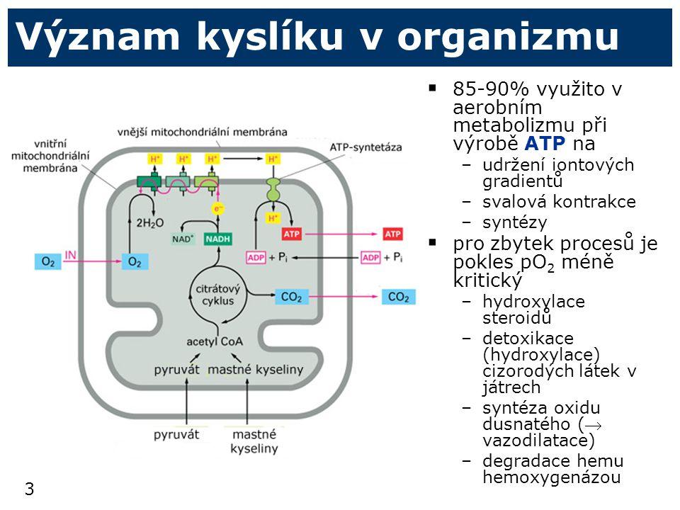 3 Význam kyslíku v organizmu  85-90% využito v aerobním metabolizmu při výrobě ATP na –udržení iontových gradientů –svalová kontrakce –syntézy  pro zbytek procesů je pokles pO 2 méně kritický –hydroxylace steroidů –detoxikace (hydroxylace) cizorodých látek v játrech –syntéza oxidu dusnatého ( vazodilatace) –degradace hemu hemoxygenázou