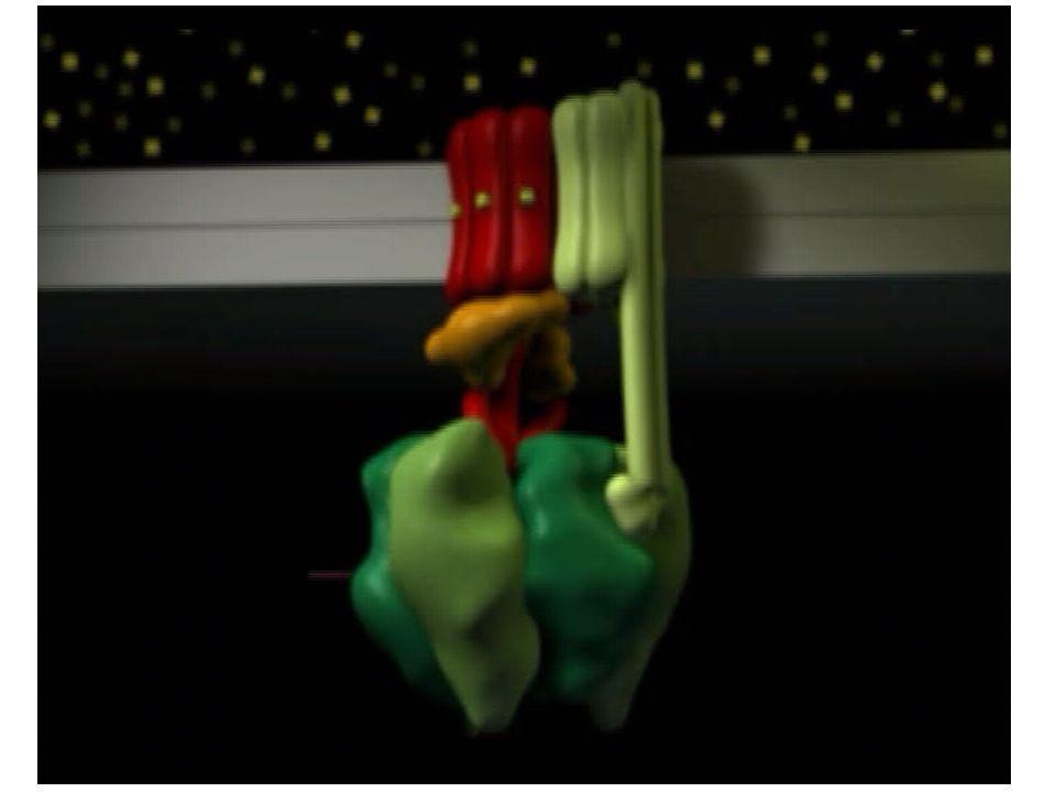 15 Cyanóza = tmavěmodrý (ř.)  při vzestupu konc.