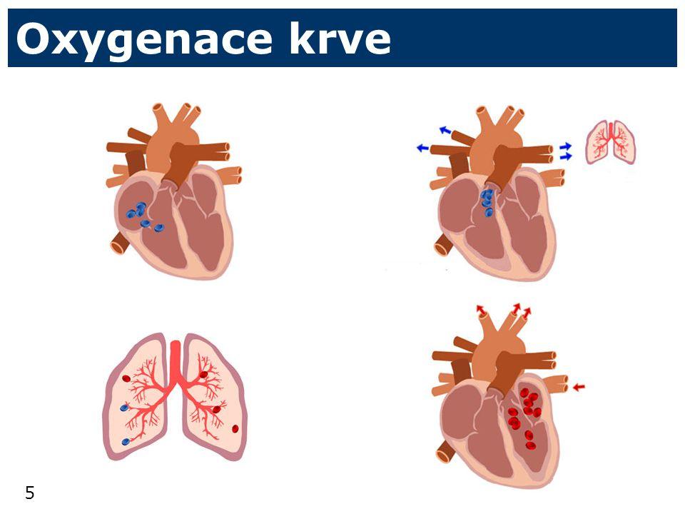 5 Oxygenace krve