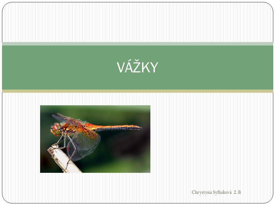 Vědecká klasifikace Ř íše: živo č ichové(Animalia) Kmen: č lenovci (Arthropoda) T ř ída: hmyz (Insecta) Ř ád: vážky (Odonata) Pod ř ády: motýlice (Zygoptera) - motýlice, šídlatky, šidélka aj.