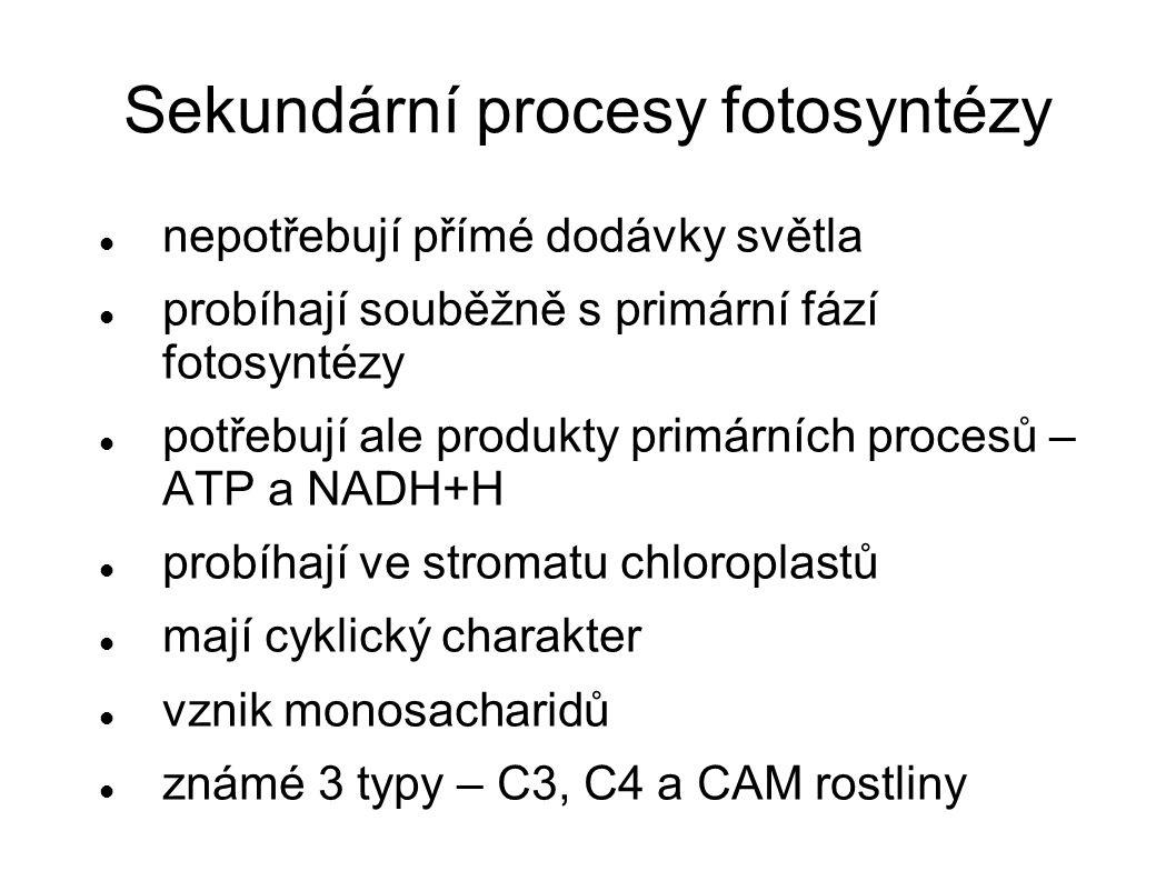 C3 rostliny sekundární procesy realizují Calvinovým cyklem většina známých rostlin a řas (řepa, slunečnice, obiloviny) rostliny mírného pásu menší přírůstek biomasy – téměř polovinu produktů fotosyntézy prodýchají akceptorem CO 2 je ribulóza -1,5-bifosfát prvním stabilním meziproduktem asimilace je tříuhlíkatý 3- fosfoglycerát  C 3 -rostliny