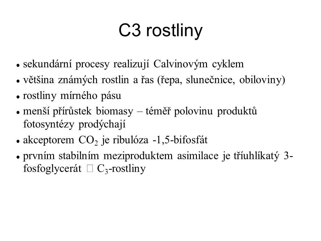 C3 rostliny sekundární procesy realizují Calvinovým cyklem většina známých rostlin a řas (řepa, slunečnice, obiloviny) rostliny mírného pásu menší pří