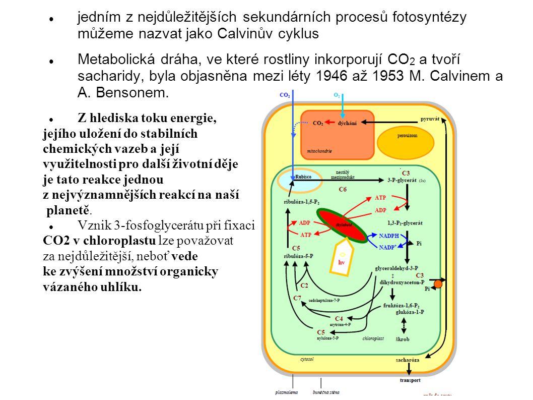 jedním z nejdůležitějších sekundárních procesů fotosyntézy můžeme nazvat jako Calvinův cyklus Metabolická dráha, ve které rostliny inkorporují CO 2 a