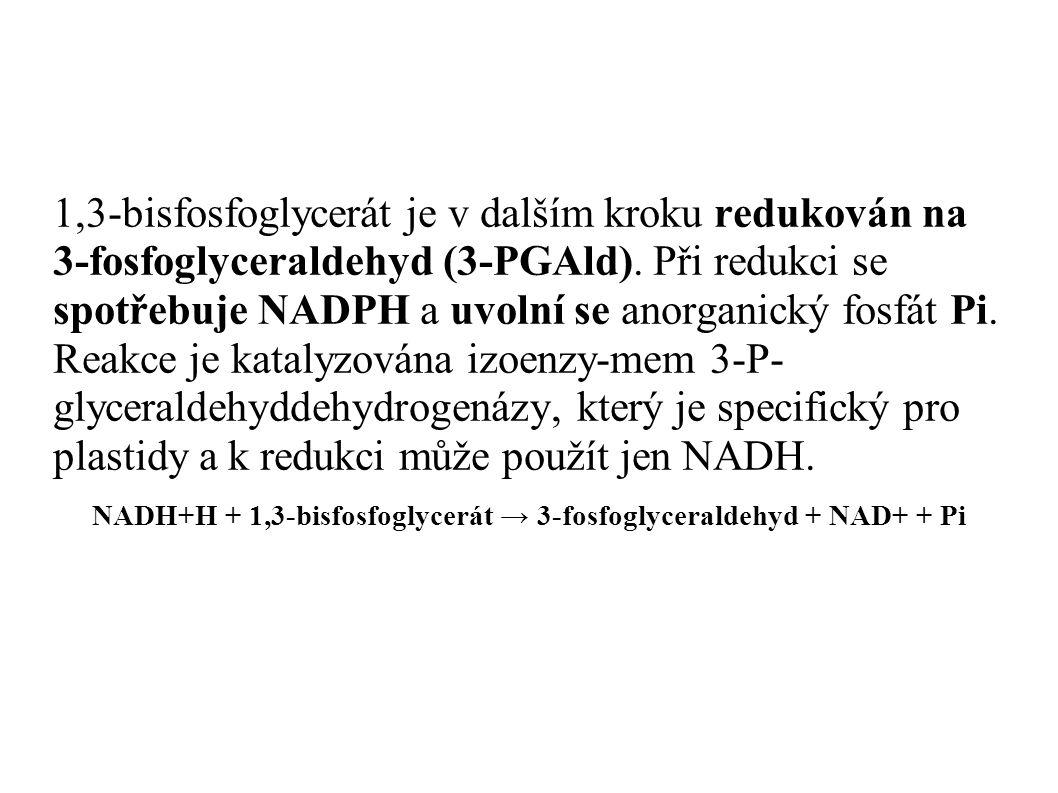 1,3-bisfosfoglycerát je v dalším kroku redukován na 3-fosfoglyceraldehyd (3-PGAld). Při redukci se spotřebuje NADPH a uvolní se anorganický fosfát Pi.