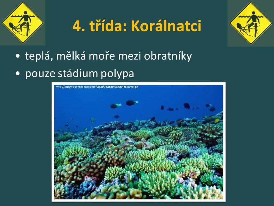 4. třída: Korálnatci teplá, mělká moře mezi obratníky pouze stádium polypa http://images.sciencedaily.com/2008/04/080401200446-large.jpg