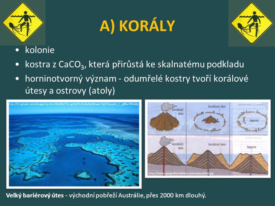 A) KORÁLY kolonie kostra z CaCO 3, která přirůstá ke skalnatému podkladu horninotvorný význam - odumřelé kostry tvoří korálové útesy a ostrovy (atoly)