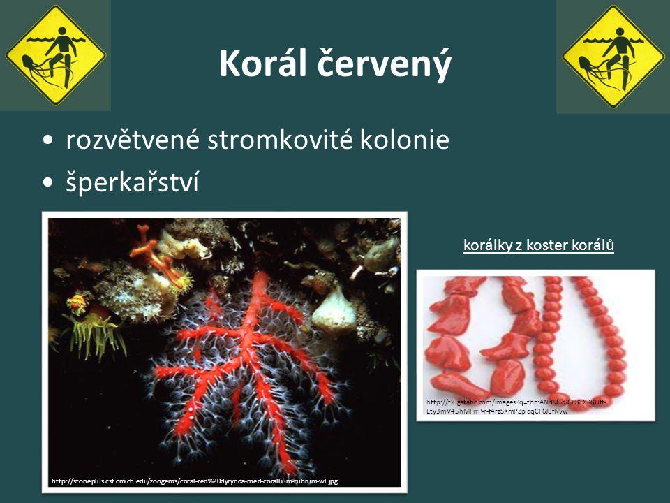 Korál červený rozvětvené stromkovité kolonie šperkařství http://stoneplus.cst.cmich.edu/zoogems/coral-red%20dyrynda-med-corallium-rubrum-wl.jpg http:/
