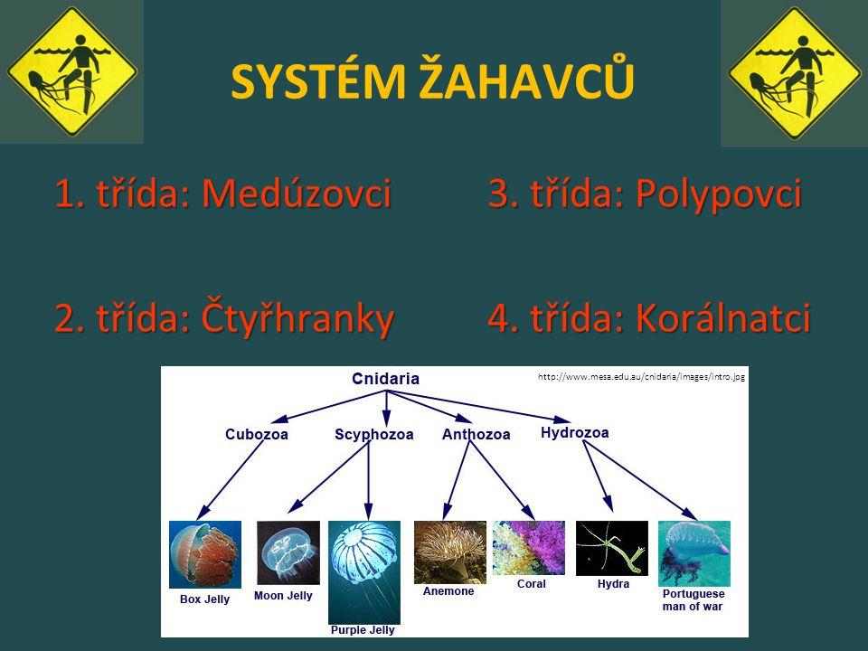 SYSTÉM ŽAHAVCŮ 1. třída: Medúzovci3. třída: Polypovci 2. třída: Čtyřhranky4. třída: Korálnatci http://www.mesa.edu.au/cnidaria/images/intro.jpg