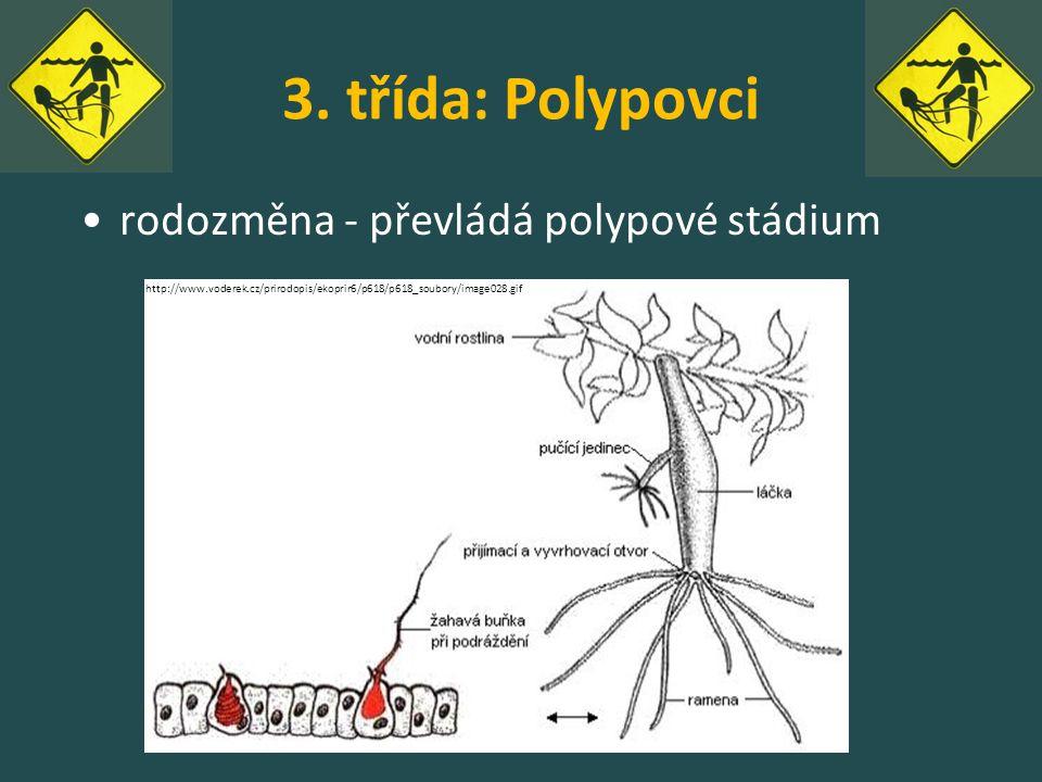 3. třída: Polypovci rodozměna - převládá polypové stádium http://www.voderek.cz/prirodopis/ekoprir6/p618/p618_soubory/image028.gif