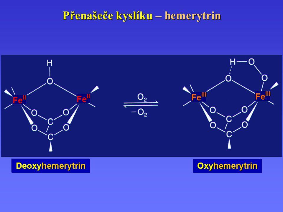Přenašeče kyslíku – hemerytrin Deoxyhemerytrin Oxyhemerytrin III Fe III II Fe II