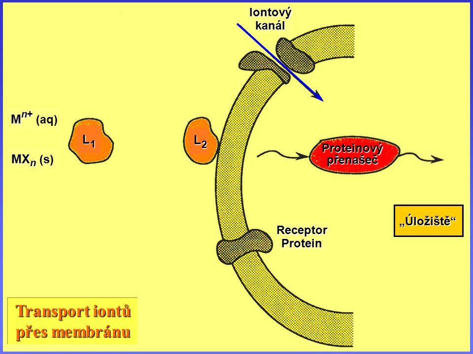 Iontové kanály peptidová sekvence gramidicinu gramidicinu : formyl – Val Val – Gly Gly – Ala Ala – Leu Leu – Ala Ala – Val Val – – – Trp Trp – Leu Leu – Trp Trp – Leu Leu – Trp Trp – Leu Leu – Trp Trp – NHCH 2 CH 2 OH kanálpór